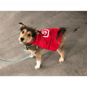 PETSTOCK ASSIST Pet Refuge Capes SMALL