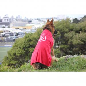 PETSTOCK ASSIST Pet Refuge Capes LARGE