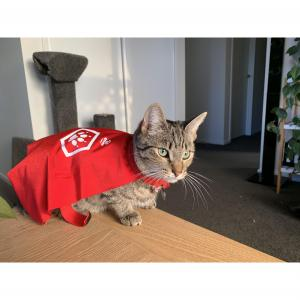 PETSTOCK ASSIST Pet Refuge Capes X SMALL