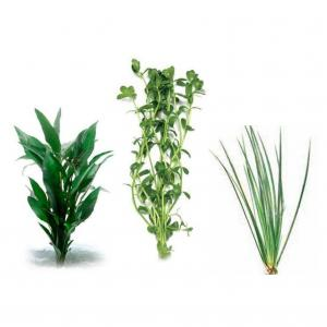 LIVE PLANT Assorted Live Aquatic Plants